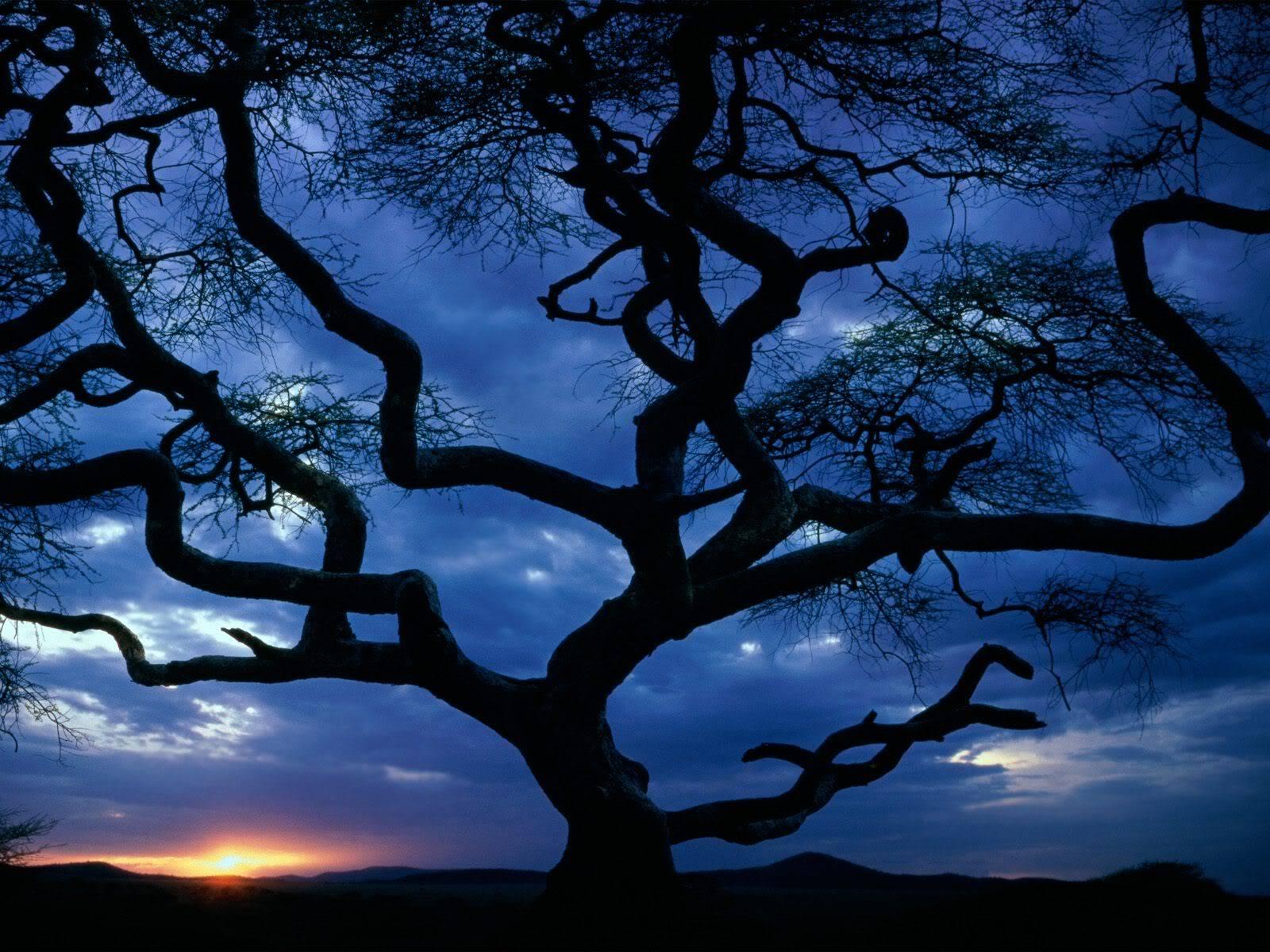 இயற்கை அழகு நிறைந்த காட்சிகள்  SerengetiNationalParkTanzania