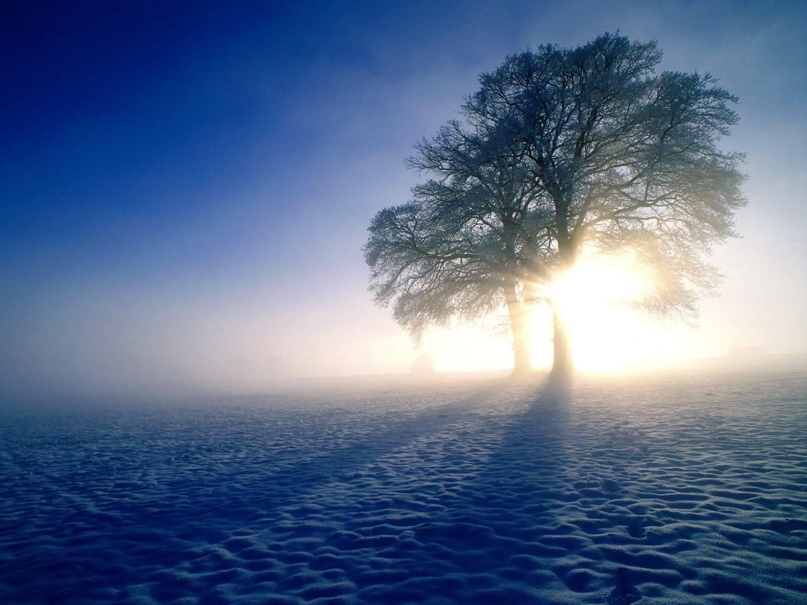 இயற்கை அழகு நிறைந்த காட்சிகள்  WinterInspirationsOakTrees