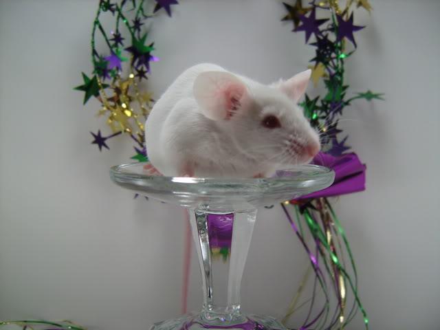 Mice Gone Wild! Mardi Gras Edition!  PICT5972