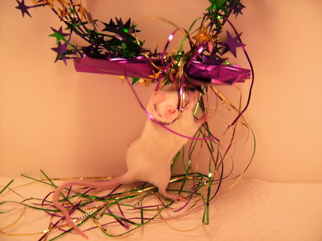 Mice Gone Wild! Mardi Gras Edition!  PICT5975