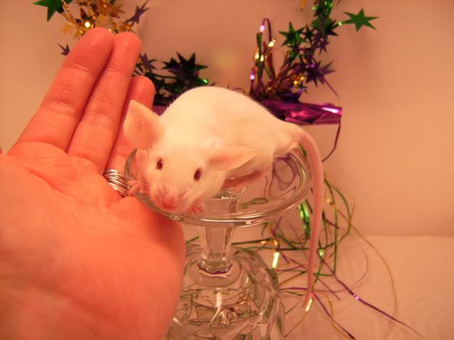 Mice Gone Wild! Mardi Gras Edition!  PICT5979