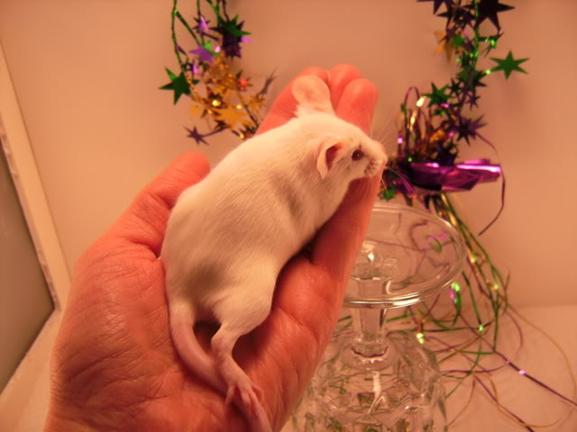 Mice Gone Wild! Mardi Gras Edition!  PICT5984