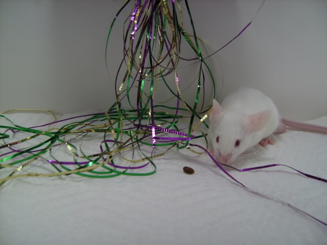 Mice Gone Wild! Mardi Gras Edition!  PICT5985