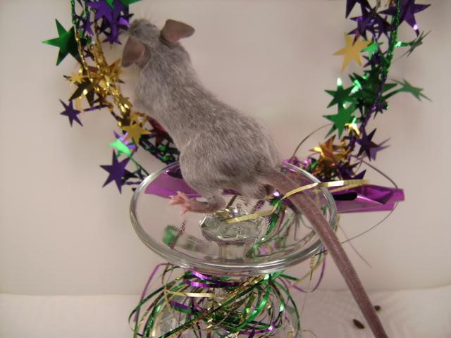 Mice Gone Wild! Mardi Gras Edition!  PICT5989