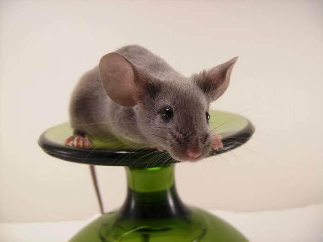 Mice Gone Wild! Mardi Gras Edition!  PICT6035