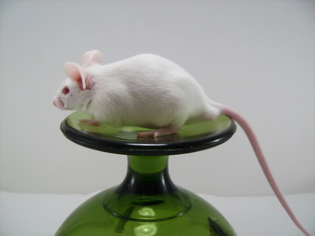 Mice Gone Wild! Mardi Gras Edition!  PICT6063