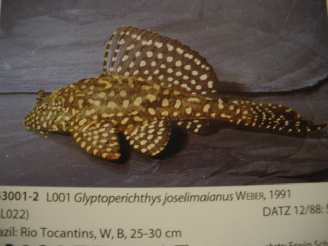 check list loricariidae 1ere partie IMGP0086