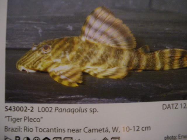 check list loricariidae 1ere partie IMGP0087