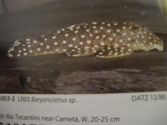 check list loricariidae 1ere partie IMGP0088