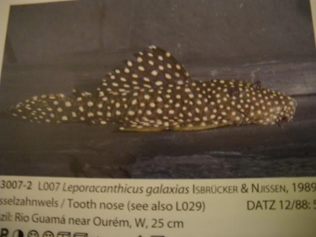 check list loricariidae 1ere partie IMGP0093