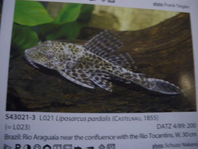 check list loricariidae 1ere partie IMGP0109