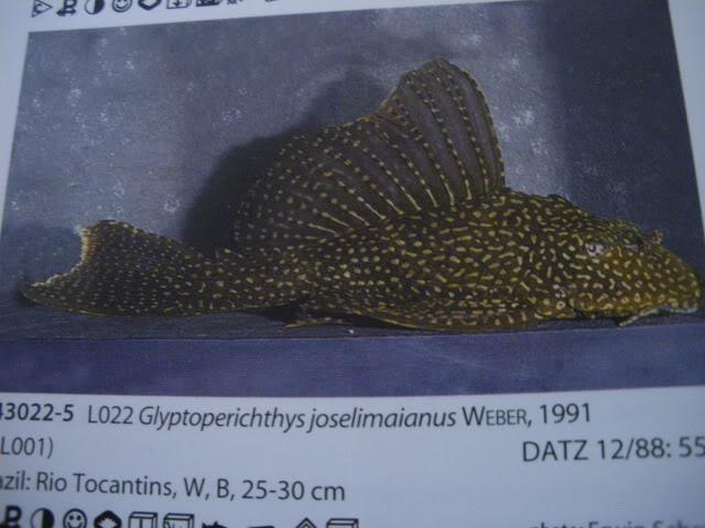 check list loricariidae 1ere partie IMGP0110