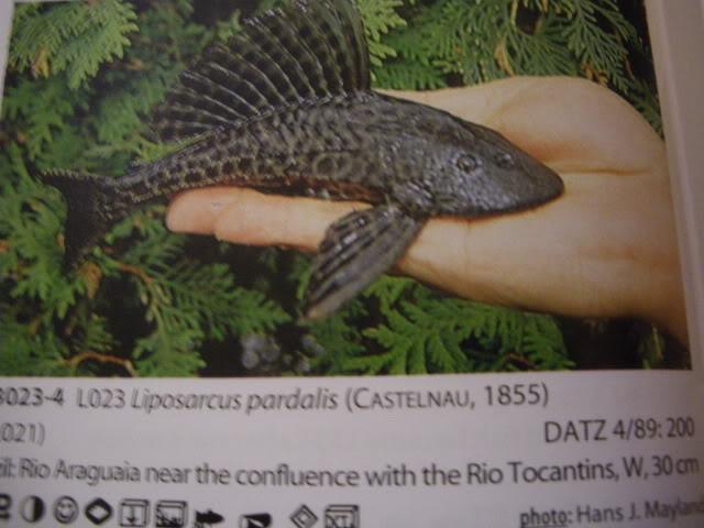 check list loricariidae 1ere partie IMGP0111