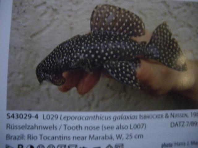 check list loricariidae 1ere partie IMGP0121