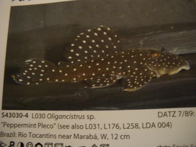 check list loricariidae 1ere partie IMGP0122