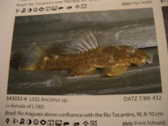 check list loricariidae 1ere partie IMGP0124