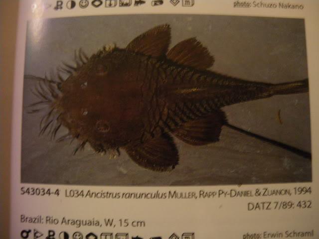 check list loricariidae 1ere partie IMGP0126