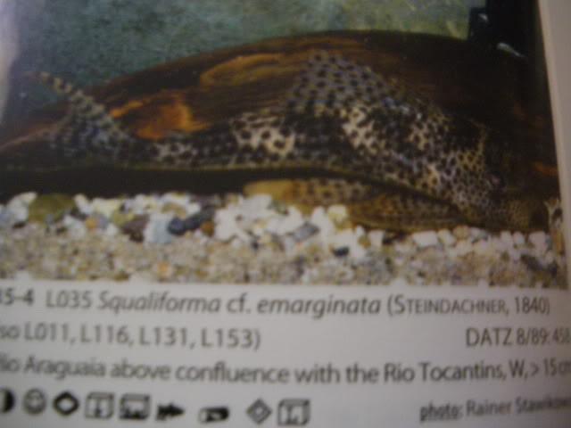 check list loricariidae 1ere partie IMGP0127