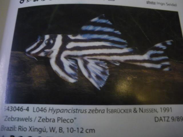 check list loricariidae 1ere partie IMGP0138