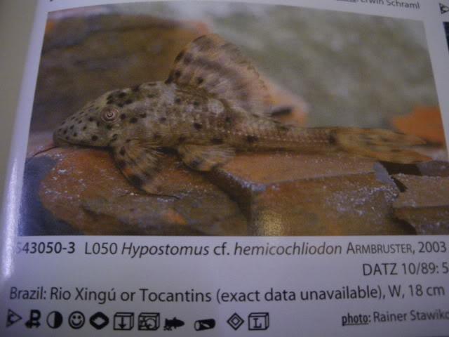 check list loricariidae 1ere partie IMGP0143