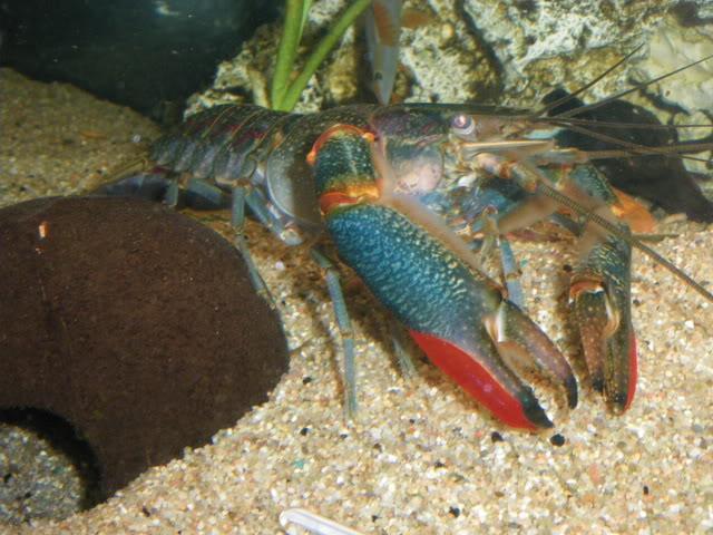 aquarium de 600 litres de aronono IMGP0630