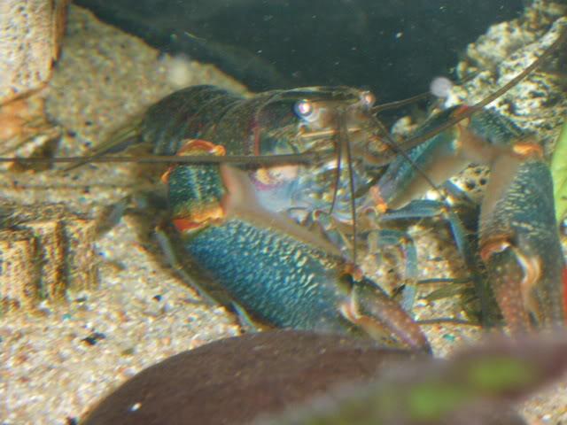 aquarium de 600 litres de aronono IMGP0638
