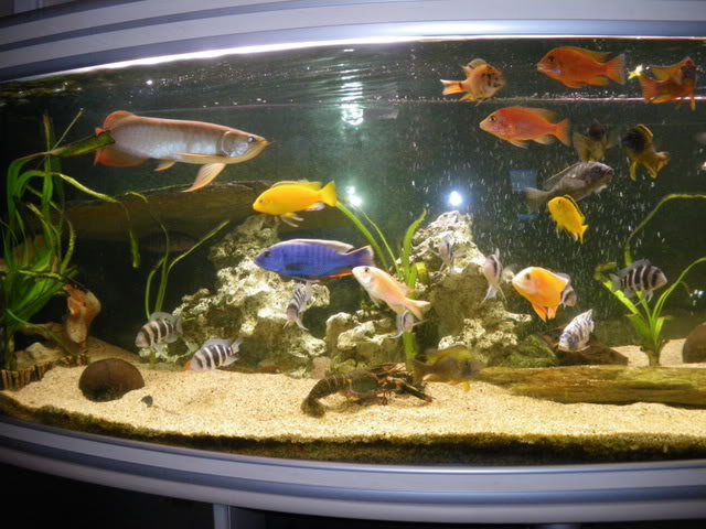 aquarium de 600 litres de aronono IMGP0644