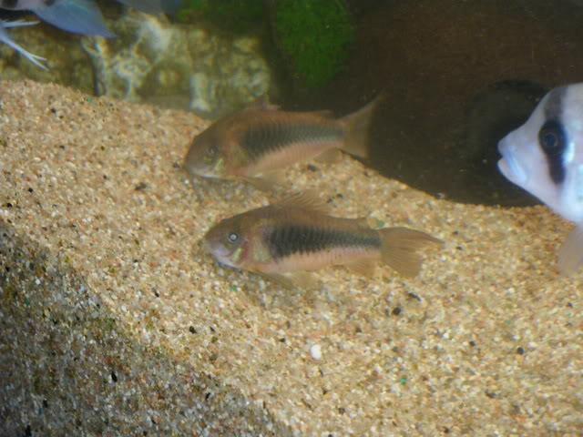 aquarium de 600 litres de aronono IMGP0864
