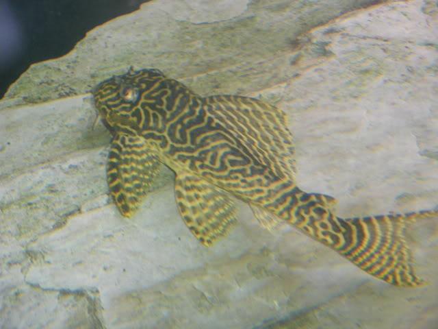 aquarium de 600 litres de aronono IMGP1401
