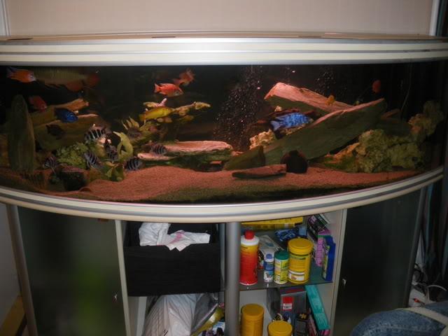 aquarium de 600 litres de aronono IMGP1544