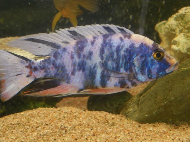 aquarium de 600 litres de aronono IMGP1580