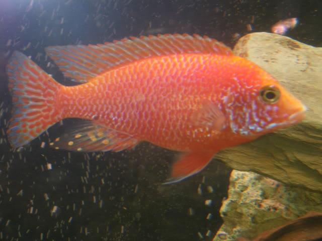 aquarium de 600 litres de aronono IMGP1581