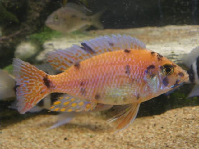 aquarium de 600 litres de aronono IMGP1582