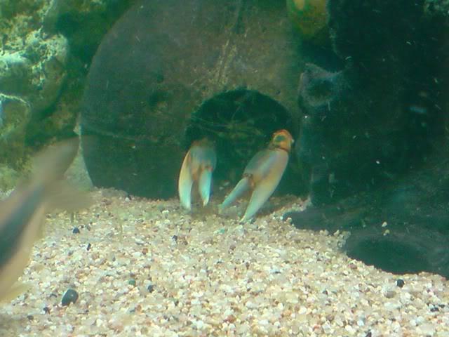 aquarium de 600 litres de aronono P061008_1630