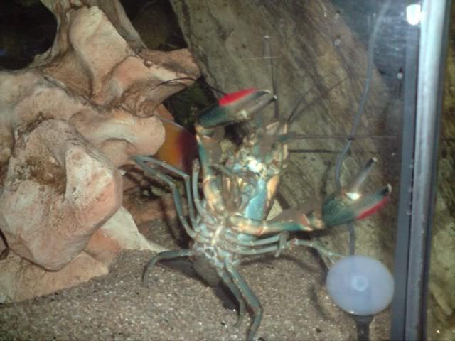 aquarium de 600 litres de aronono P110109_2337