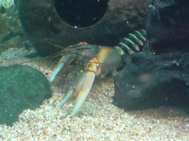 aquarium de 600 litres de aronono P121008_1214