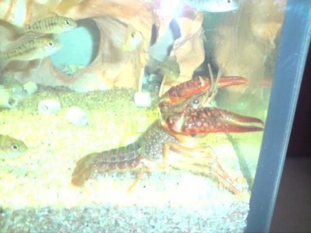 aquarium de 600 litres de aronono P140109_235805