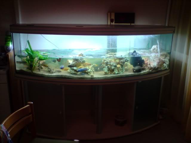 aquarium de 600 litres de aronono P150808_2343