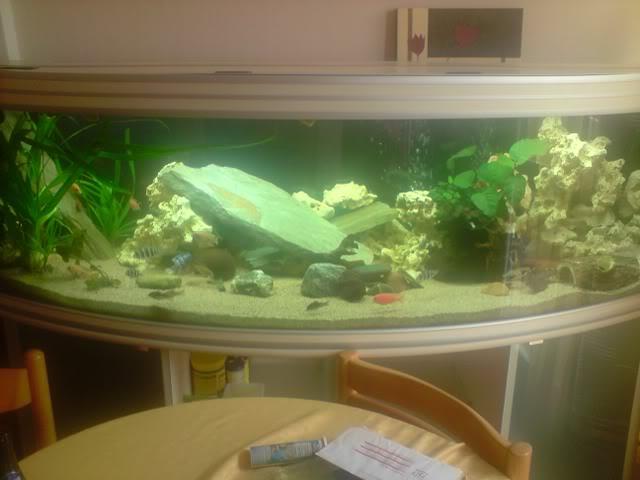 aquarium de 600 litres de aronono P180808_1541