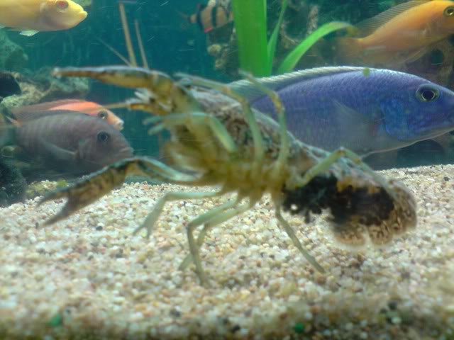 aquarium de 600 litres de aronono P230908_2217