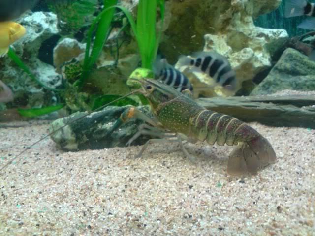 aquarium de 600 litres de aronono P271008_1139