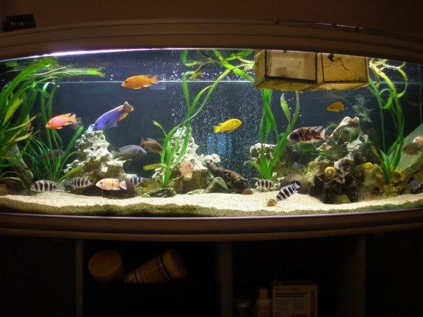 aquarium de 600 litres de aronono N623061432_1387095_1979