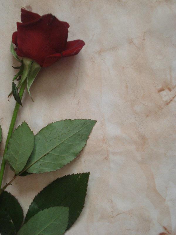 Pisem ti pismo... Rose_Letter_Stock_2_by_Senzi