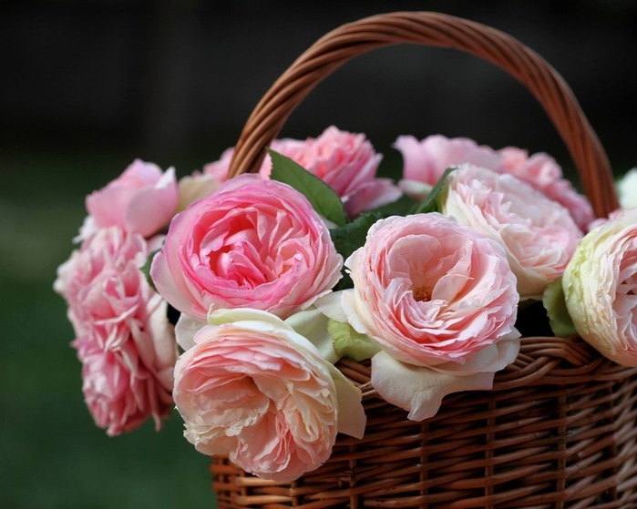 KORAKOM SNOHVATICA...- Najda M. vs Pajac Hus 119901876_flowers_in_basket_17_zpsftngze4k