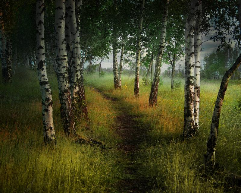 Breze Birch_trees_by_elenadudina-d4debpw_zps6e8d6e3c