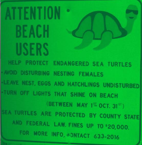 Abortion Turtle