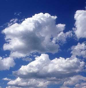 Zanimljiva svaštara Oblacis