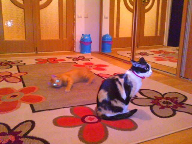 Shake - pisica noastra - Pagina 7 P110410_21270001