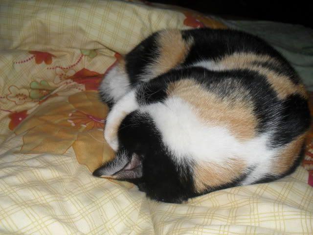 Shake - pisica noastra - Pagina 7 SDC12046