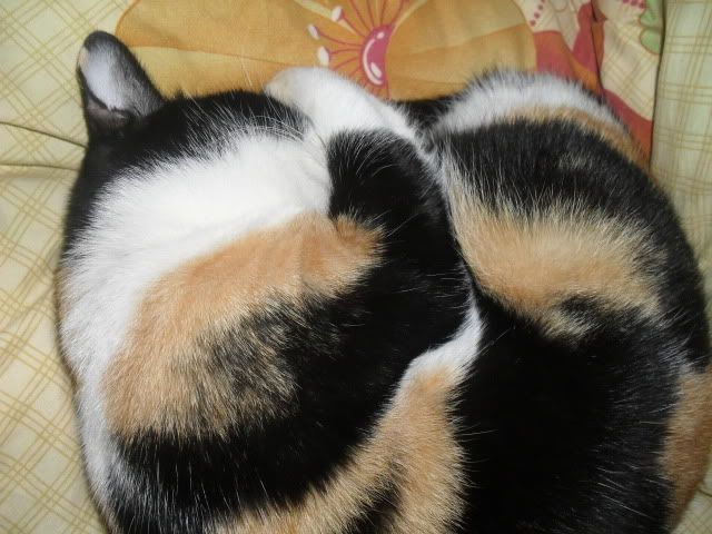 Shake - pisica noastra - Pagina 7 SDC12048